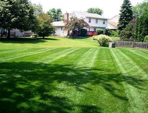 Lawn maintenance pic