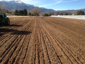 Drill seed operations